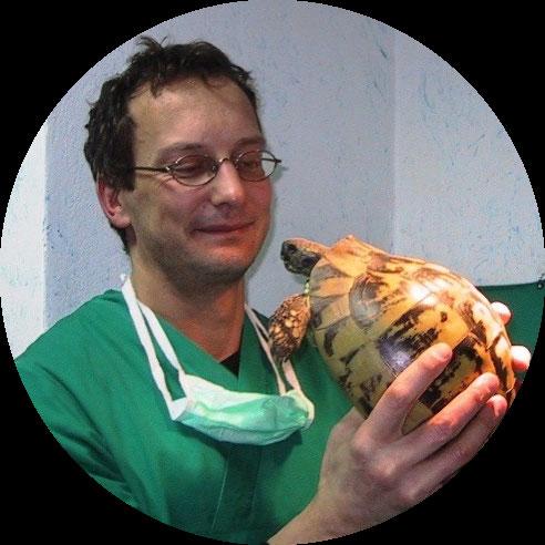 Letargo tartarughe