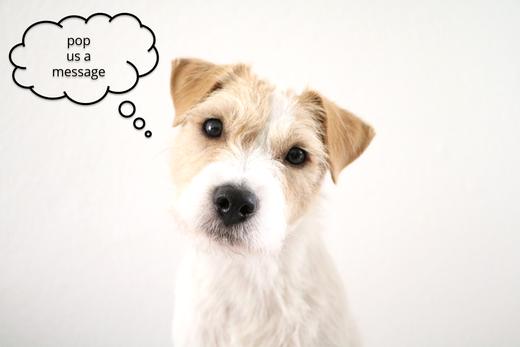 rudi.licious Kontakt Parson Russell Terrier