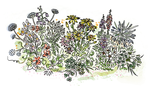 Blumen kennenlernen