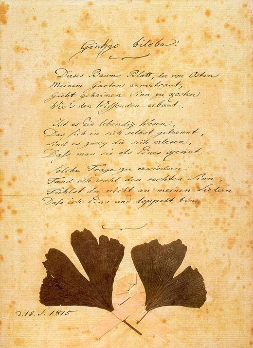 "Reinschrift des Goethe-Gedichts ""Gingo biloba"" (Original Goethe-Museum Düsseldorf, gemeinfrei)"