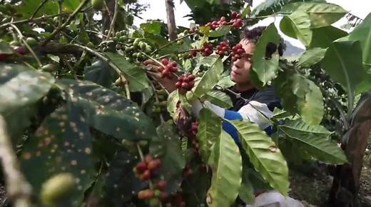 caffe fairtrade da commercio equosolidale