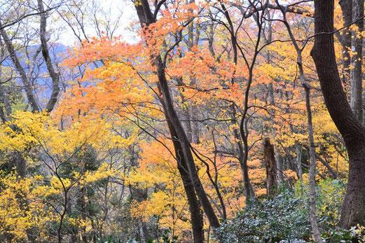 山頂直下ではこんな美しい紅葉も