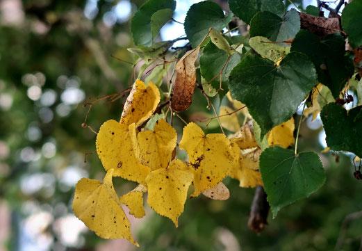 16. September 2018 - Vorboten des Herbsts