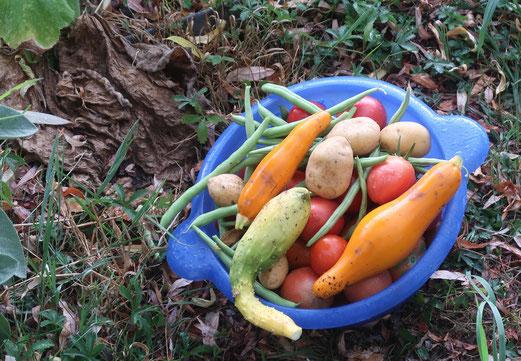 08. August 2018 - Im Garten: grosse Trockenheit - kleine Ernte