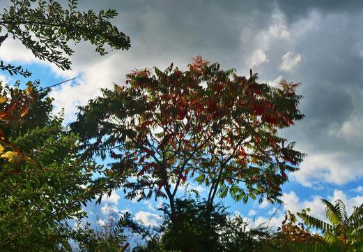 04. Oktober 2017 - Herbst