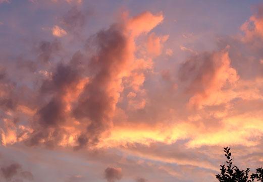 17. September 2018 - Wenn Bäume in den Himmel wachsen
