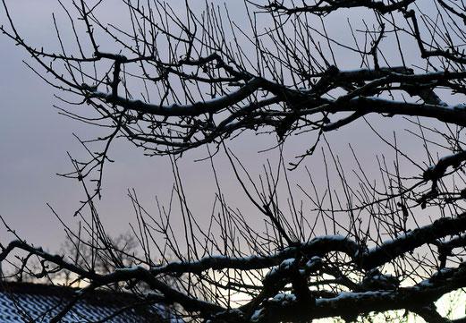 03. Dezember 2017 - Das Warten auf den Frühling