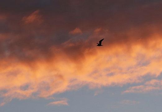 11. Januar 2018 - Feuervogel
