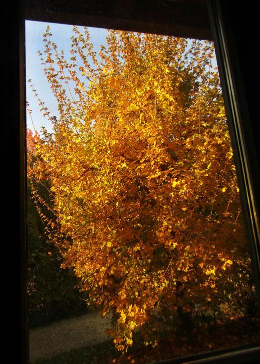 03. November 2018 - Warum auch in die Ferne schweifen....  Mein Bürofenster.