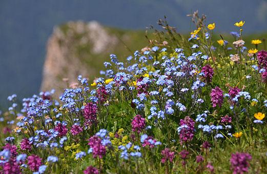Bunte Blumenwiese auf dem Männlichen