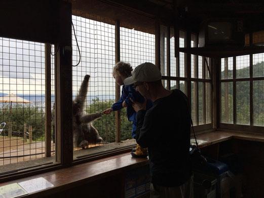 Family Friendly Walks in Kyoto, Japan - Monkey Park Iwatayama