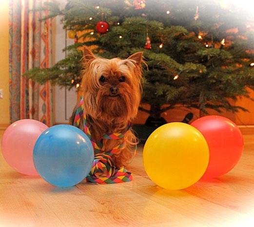 Lana konnte es gestern gar nicht abwarten und hatte schon mal mit dem Dekorieren für die Silvesterparty begonnen :-)