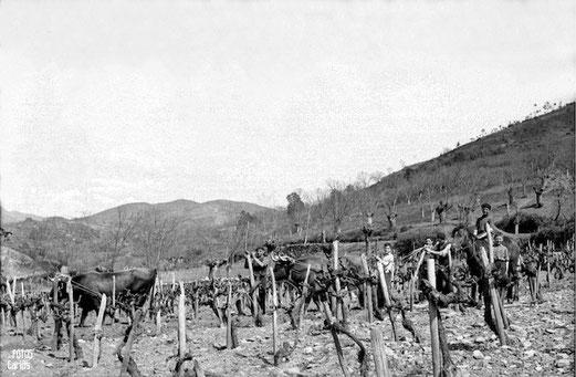 1958-Pueblo-Bergaza-Carlos-Diaz-Gallego-asfotosdocarlos.com