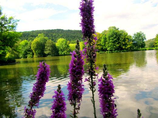 Der hintere Teil des Parksees ist ein Beispiel für die herrliche Landschaft ..