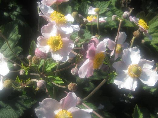 Blütentanz