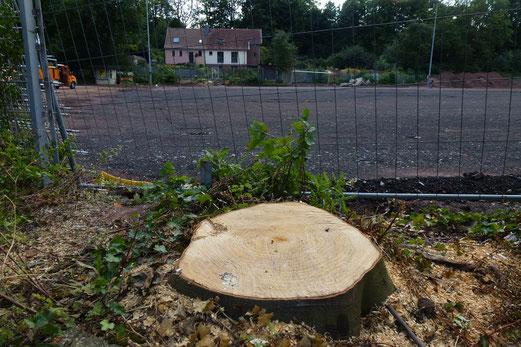 25.07.2012: Baum ab (Foto: mal).