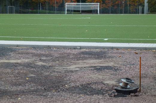 13.10.2012: Gulli an Kunstrasen (Foto: mal).