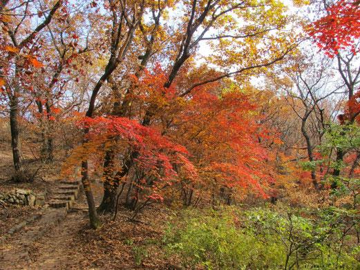 紅葉がきれい。