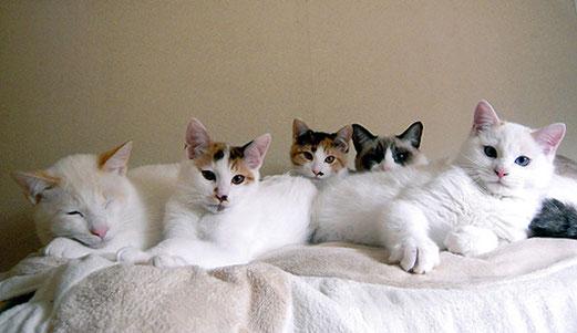 どの子も個性的で美ニャンコ(左からシロ、キキ、スズ、パンダ、カズオ)