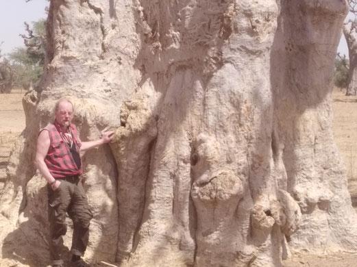 baobabbaum, baum, holger bublitz