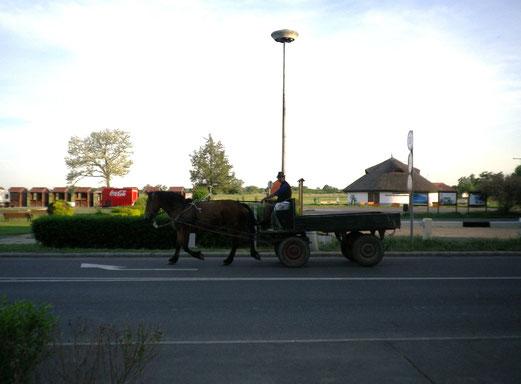 Fuhrwerk in Ungarn