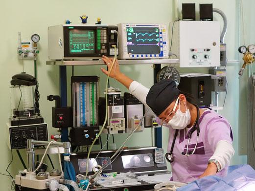 Miau&Guau Anestesiología
