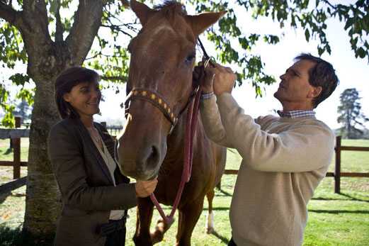 soins-chevaux