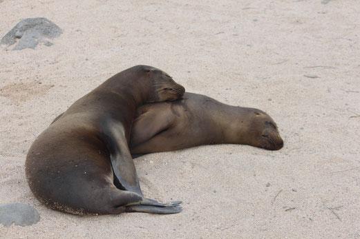 Island Hopping Inselhüpfen Galapagos mit ECUADORline buchen