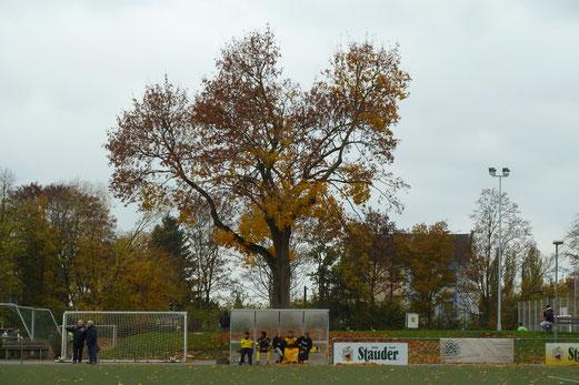 TuS A-Jugend im Auswärtsspiel beim ESC Preußen. - Fotos: mal.