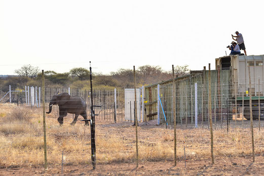 Freilassung der Elefanten im Mapesu Nature Reserve