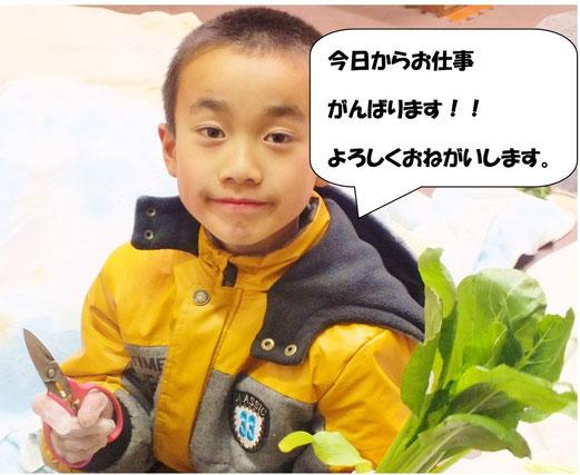 長男くんが小松菜を持つ写真
