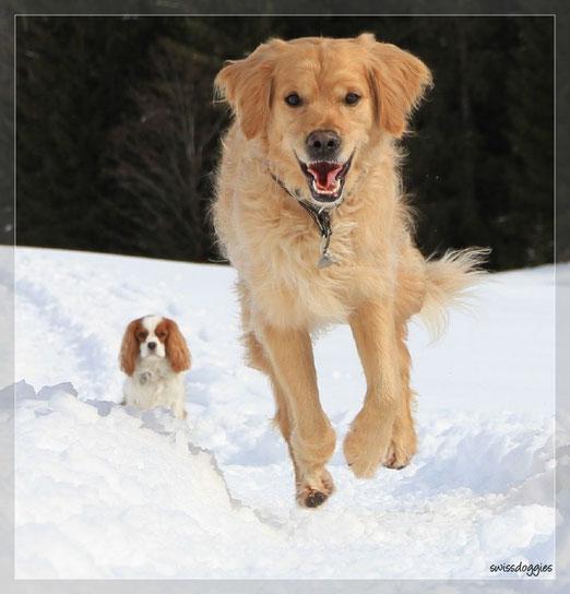 Mama macht Übungen mit uns. Ich muss warten und Roxy darf zu ihr rennen - oder fliegen?