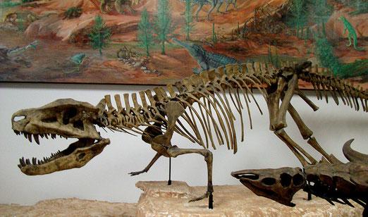 Petrified Forest National Park. Vor rund 200 Millionen Jahren war das Gebiet noch ein Sumpf wo Dinosaurier und andere Reptilien lebten.