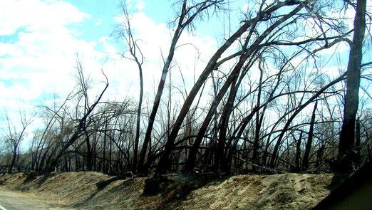 An verschiedenen Orten habe Waldbrände gewütet