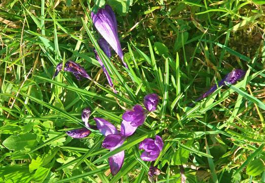 21. März 2020 - Frühlingsfarben - in der Natur verstecken sie sich noch, doch sie sind da