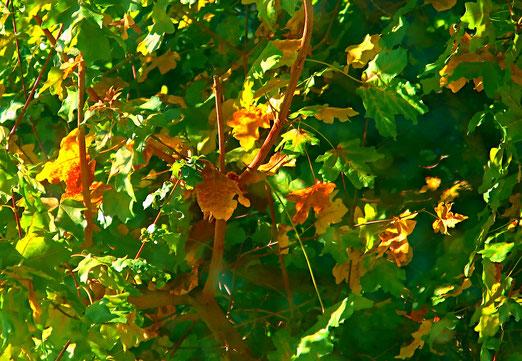 03. Oktober 2019 - Herbsterblühen