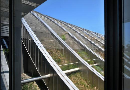 21. Juni 2017 - Natur auf dem Dach der Kunst (Paul-Klee-Museum, Bern)