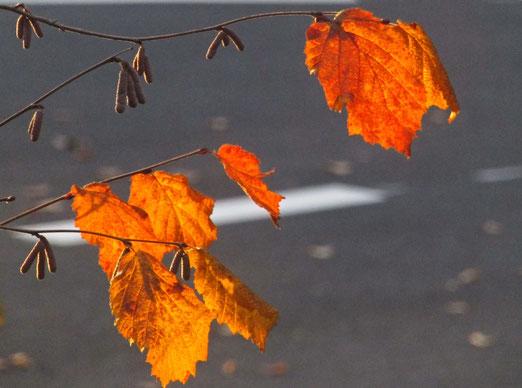 13. November 2018 - Herbst und kein Ende