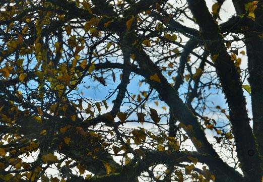 03. November 2020 - Grau, viel Hebst - mit einem blauen Hoffnungsstreifen am Himmel
