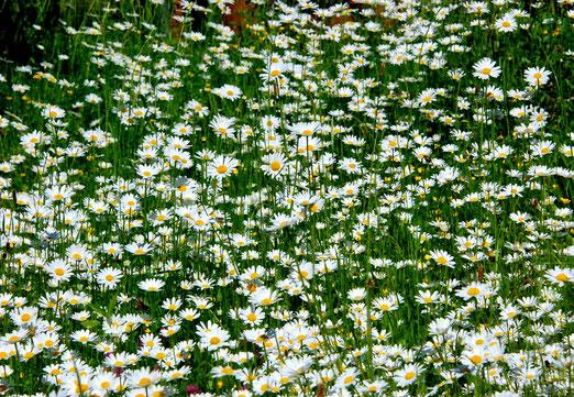 03. Juni 2021 - Weisst du wieviel Blumen stehen...?