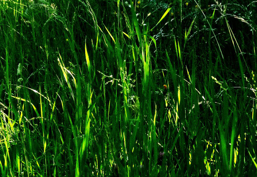 22. Mai 2020 - Man hört das Gras wachsen