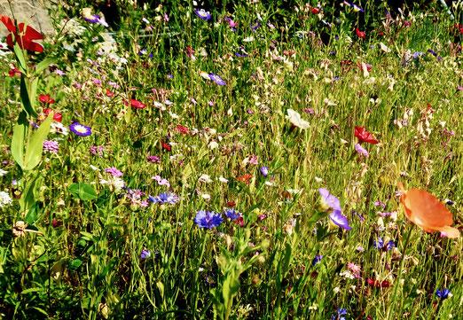 04. Juli 2018 - Man kommt nicht daran vorbei - ohne immer wieder zu Staunen. An den Blumenwiesen, auch auf den kleinsten Plätzchen. Vorbei der sterile Rasen-Trend?