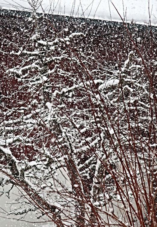 26. Januar 2021 - Das Wetter ist noch immer ein Thema. Immer wieder!