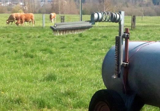 21. April 2020 - Müssen auch Kühe ihre Pfoten waschen?