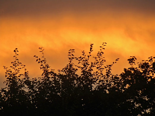 27. September 2020 - Morgenstund hat Gold im Mund
