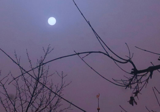 07. Februar 2021 - Am hellichten Tag. Die Sonne umrankt von Nebel und Wüstenstaub