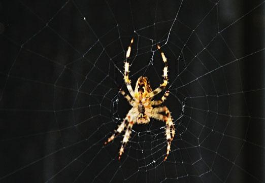"""02. September 2019 - """"Jedes Spinnetz ist eine Offenbarung gegenüber dem, was an Architeektur heute gemacht wird"""" (Luigi Colani)"""