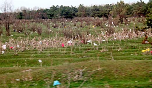 Am Strassenrand: Plastikwüste. Auf der Fahrt am grossen Sevan-See
