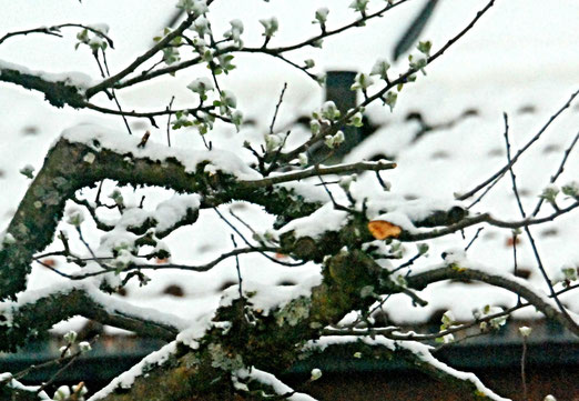 07. April 2021 - Frühling, Herbst und Winter im April  am Apfelbaum