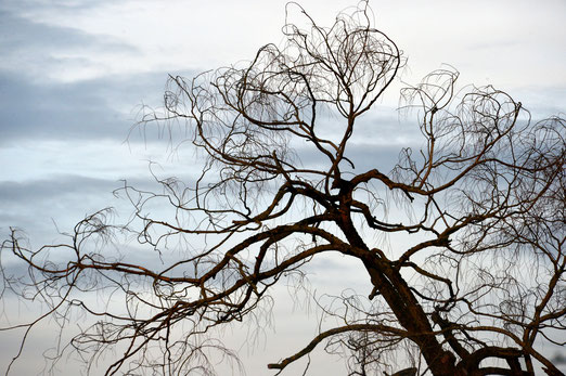 17. November 2020 -Sterbender Baum
